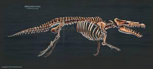 Maiacetus inuus Skeletal Study by TheDragonofDoom