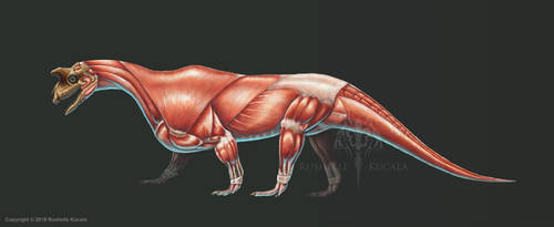 Shringasaurus Indicus Muscle Study (No Labels) by TheDragonofDoom