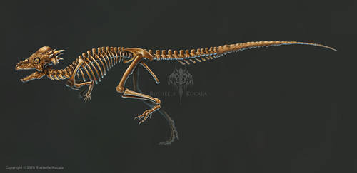 Pachycephalosaurus Skeleton Study (No Labels) by TheDragonofDoom