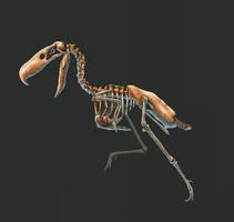 Kelenken Guillermoi Skeleton Study (No Labels) by TheDragonofDoom