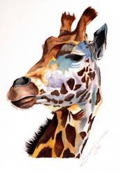Giraffe by LauraMel