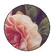 Rose Divide 2 by NatiNekoo