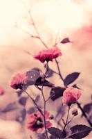 Stillness by Alyphoto