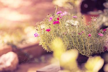 Good Morning Garden by Alyphoto