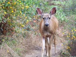 Adorable Deer stock 3 by AngelaHolmesStock