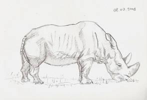 036 Rhino by terminal-blue