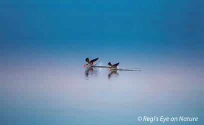 Skimming the water by regiseyeonnature