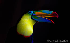 toucan Beauty by regiseyeonnature