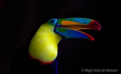 toucan Beauty by regiseyeonnature