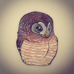 African wood owl by chennanigan