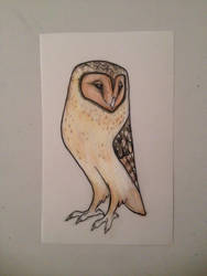 Masked Owl by chennanigan