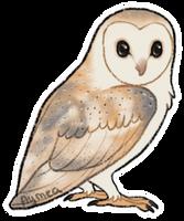 Barn owl by Aymea
