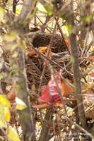 Empty nest by vertiser