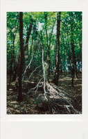 Fallen tree by vertiser