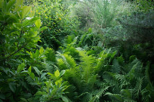 Lush Greenery by vertiser