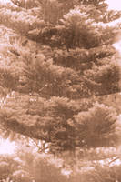 Tree in the rain by vertiser