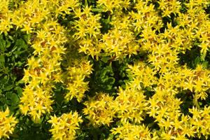 Yellow Summer by vertiser