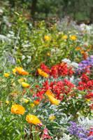 Flowers by vertiser
