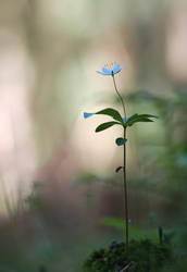 Evening flower by orestART
