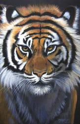 El Tigre' by HouseofChabrier