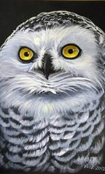Snowy Owl by HouseofChabrier