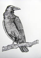 The Clever Crow by HouseofChabrier