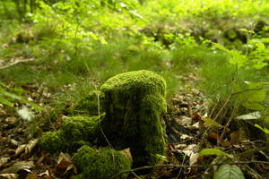 moss 2 texture by gd08