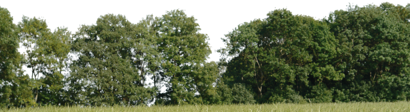 tree for background png by gd08
