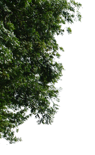 tree corner png by gd08
