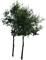 tree 13 png by gd08
