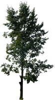 tree 14 png by gd08