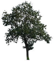 tree 15 a png by gd08