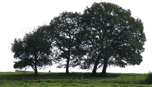 tree 21 png by gd08