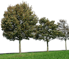 tree 32 png by gd08