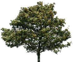 tree 35 png by gd08