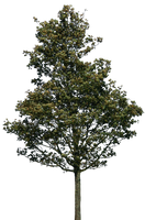 tree 38 png by gd08