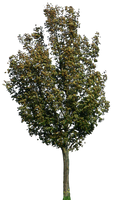 tree 40 png by gd08