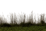 Grass 01 png by gd08