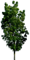 Tree 57 png HQ by gd08