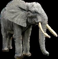 Elephant By Gd08 by gd08