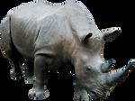 Rhino 03 By Gd08 by gd08