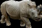 Rhino 04 By Gd08 by gd08