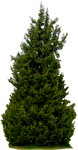 Tree 61 By Gd08 by gd08