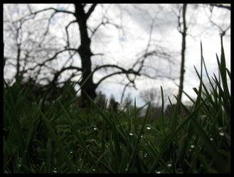Dark Dew by dancingsylph