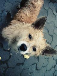 Dog2 by ksufly