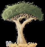 Draw a Flora: Dragon's Blood Tree by BlueRocketMouse