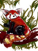 Red panda by kookybird