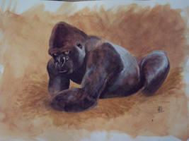 Gorilla by kookybird