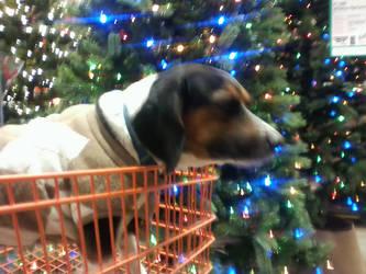 Beagle for the Holidays by Geoffryn