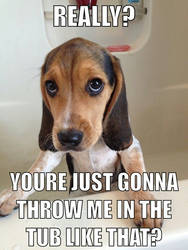 Beagle in the Tub by Geoffryn